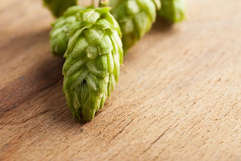 绿色新鲜的啤酒花球果树 图库摄影