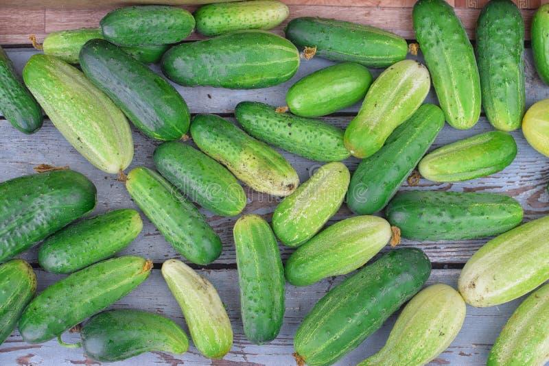 绿色新鲜的黄瓜收获在桌上的在夏天 图库摄影