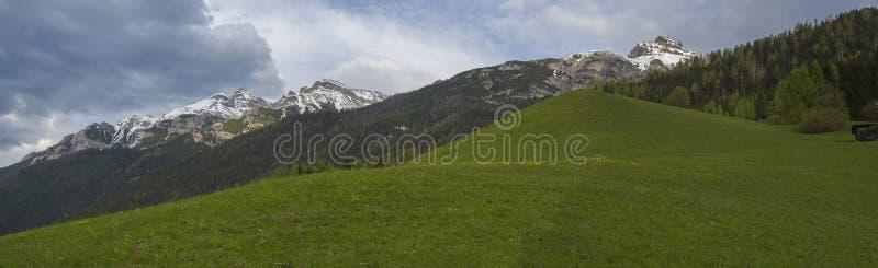 绿色春天草甸,森林和积雪的山峰全景风景有开花的花和树的 图库摄影