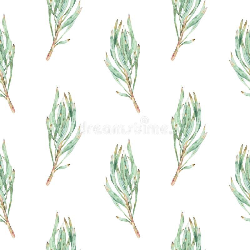 绿色普罗梯亚木叶子的水彩无缝的样式 库存例证