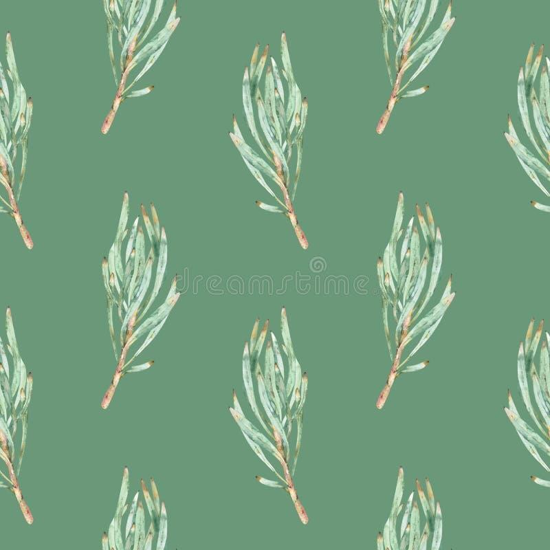 绿色普罗梯亚木叶子的水彩无缝的样式 免版税库存照片