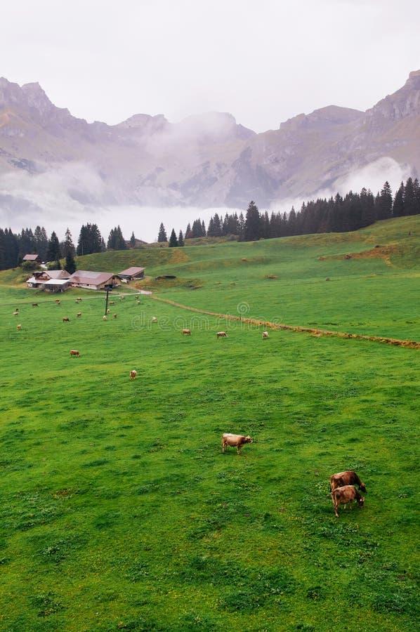 绿色有昂热尔贝格瑞士阿尔卑斯山脉的领域农村农场  免版税库存照片