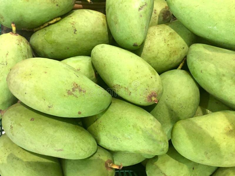 绿色未成熟的芒果 库存图片