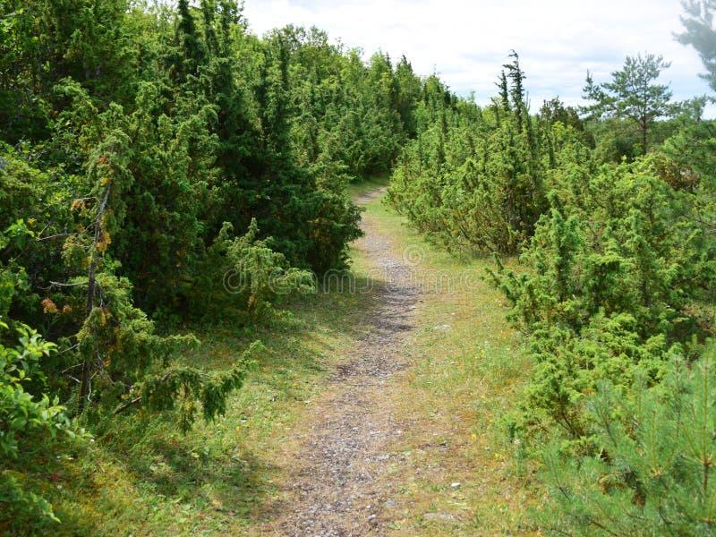 绿色杜松和岩石路 免版税库存图片