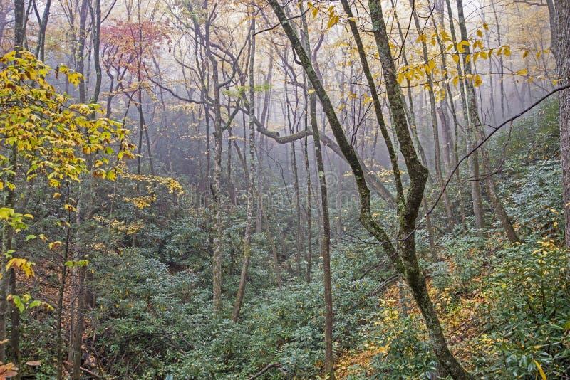 绿色杜鹃花谷围拢与雾和黄色叶子 免版税库存图片