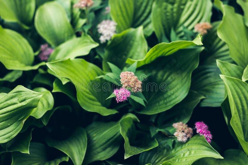 绿色构造了plantsBeautiful生动的发光的绿草 有雨下落的纯净,宜人,精密绿叶在阳光i 免版税库存照片