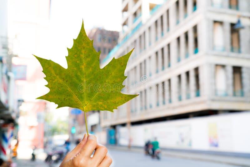 绿色枫叶在手上有迷离城市生活背景 免版税库存图片