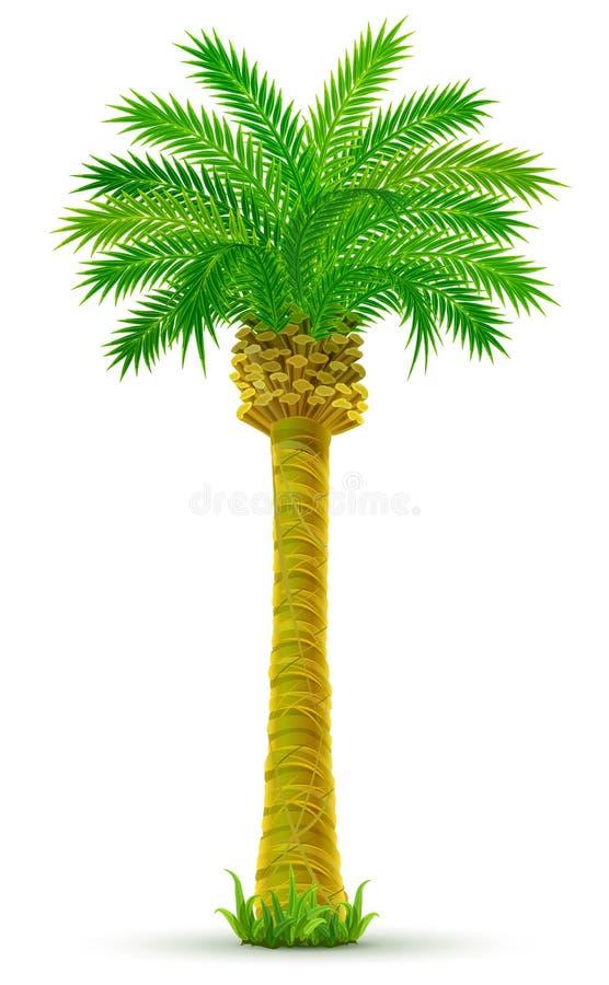 绿色查出叶子热带的棕榈树 皇族释放例证