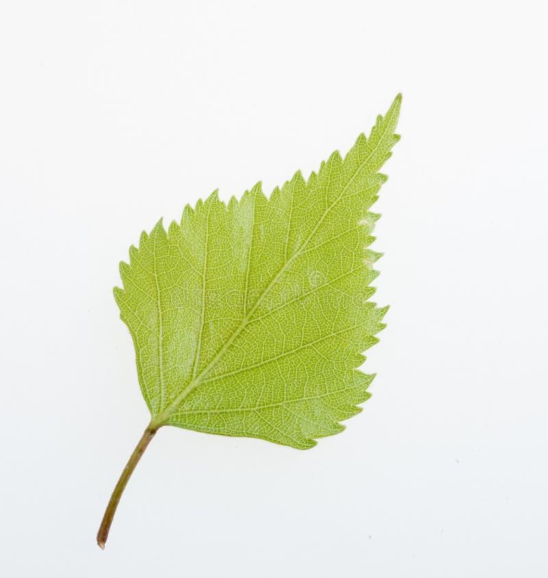 绿色查出的叶子本质 免版税库存照片