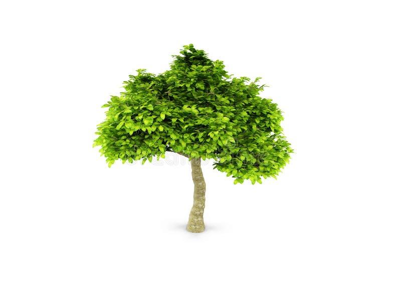 绿色查出的孤立结构树白色 向量例证