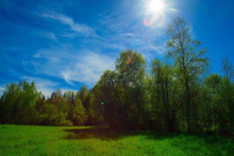 绿色树丛在一个明亮的晴天 免版税库存图片