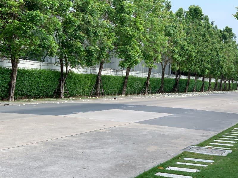 绿色树公园路背景 库存图片
