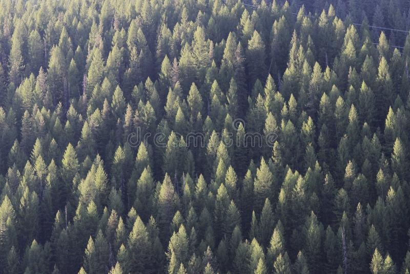 绿色树冠上在山的日落 免版税库存照片