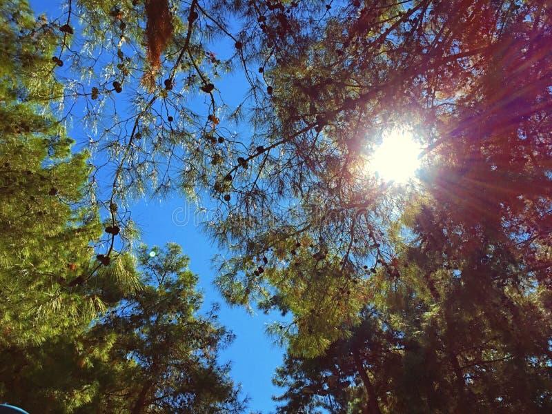 绿色树分支在天空的 库存照片