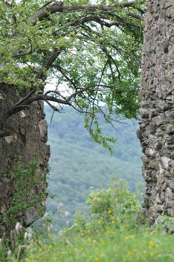 绿色树和堡垒墙壁 库存图片