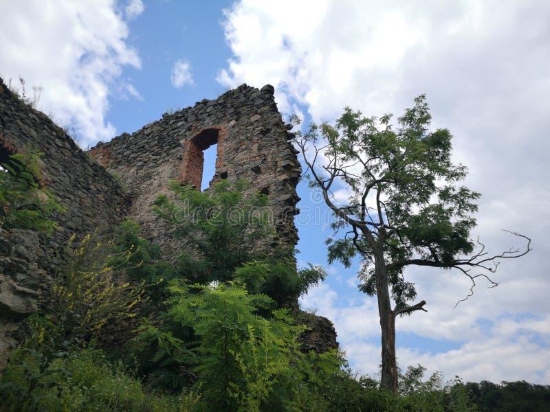 绿色树和堡垒墙壁 库存照片