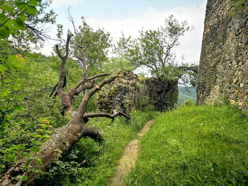 绿色树和堡垒墙壁 图库摄影