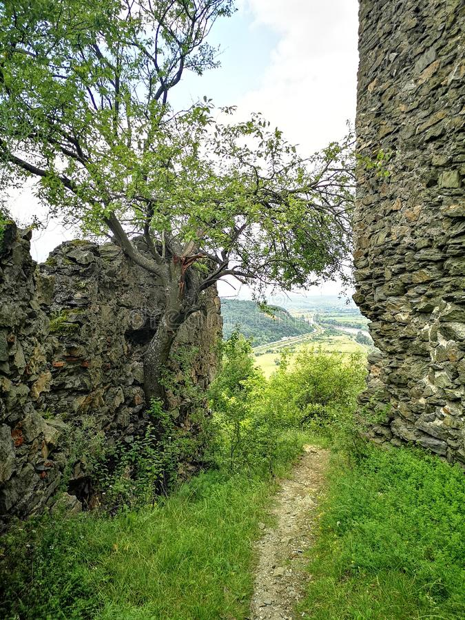 绿色树和堡垒墙壁 免版税库存照片
