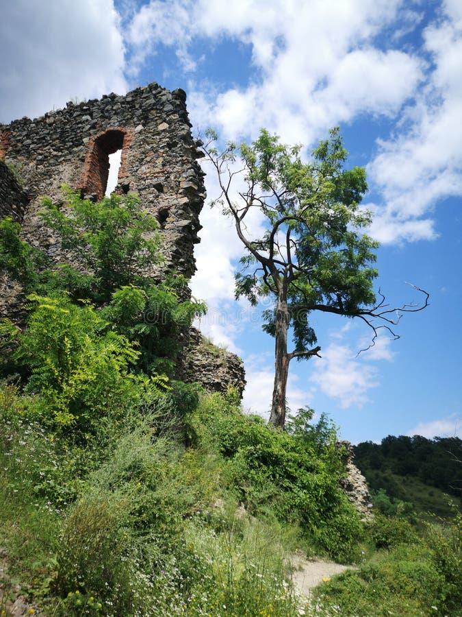 绿色树和堡垒墙壁 免版税库存图片