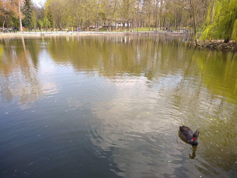 绿色树和天空蔚蓝在城市公园 伊云奴Frankivsk,乌克兰 r 免版税库存图片
