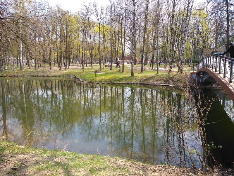 绿色树和天空蔚蓝在城市公园 E r 库存图片