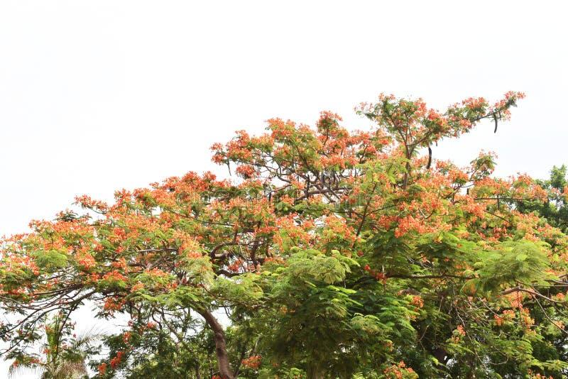 绿色树和天空 免版税库存图片