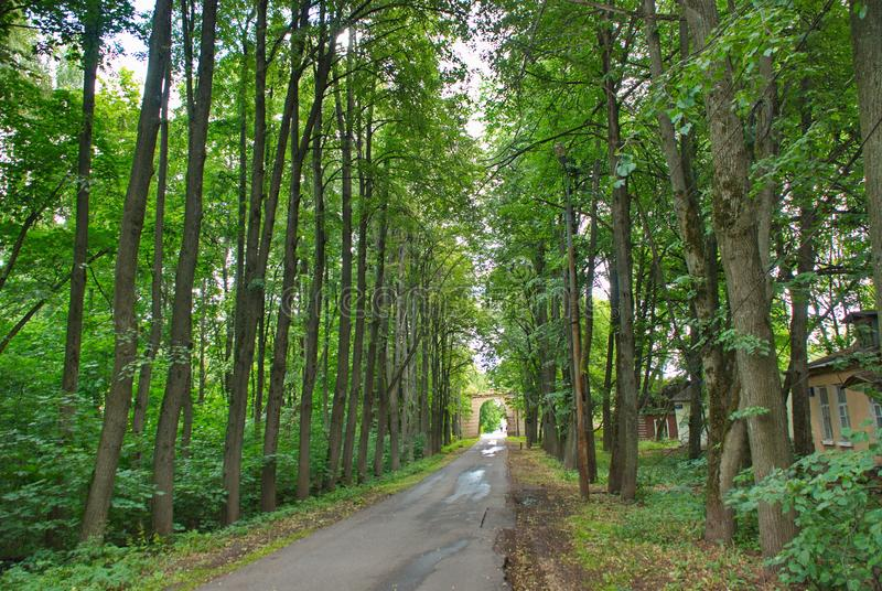 绿色树围拢的柏油路进入距离 库存照片