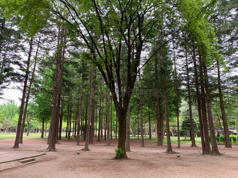 绿色树在公园背景中 库存图片