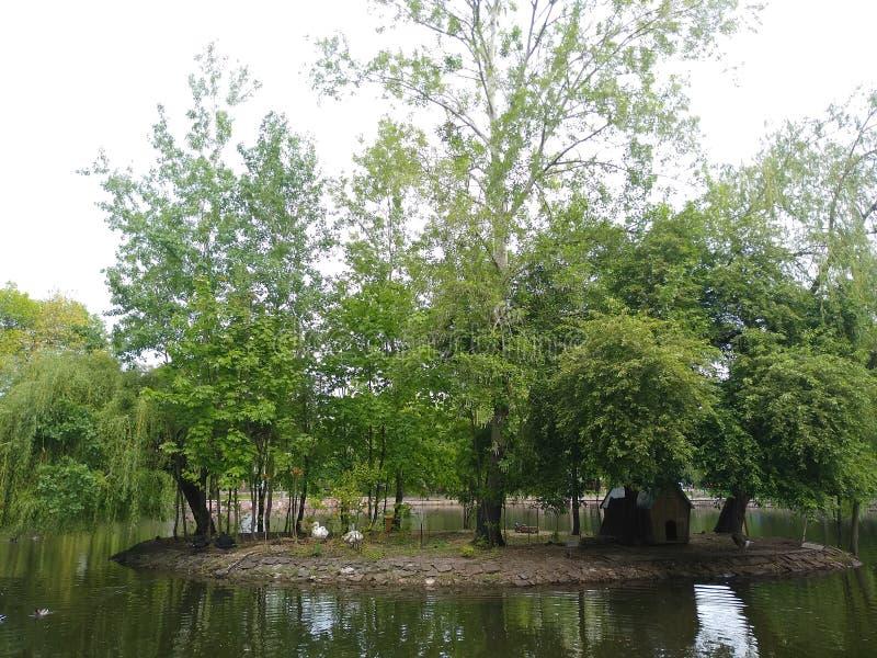 绿色树在小海岛在绿色湖 免版税库存图片