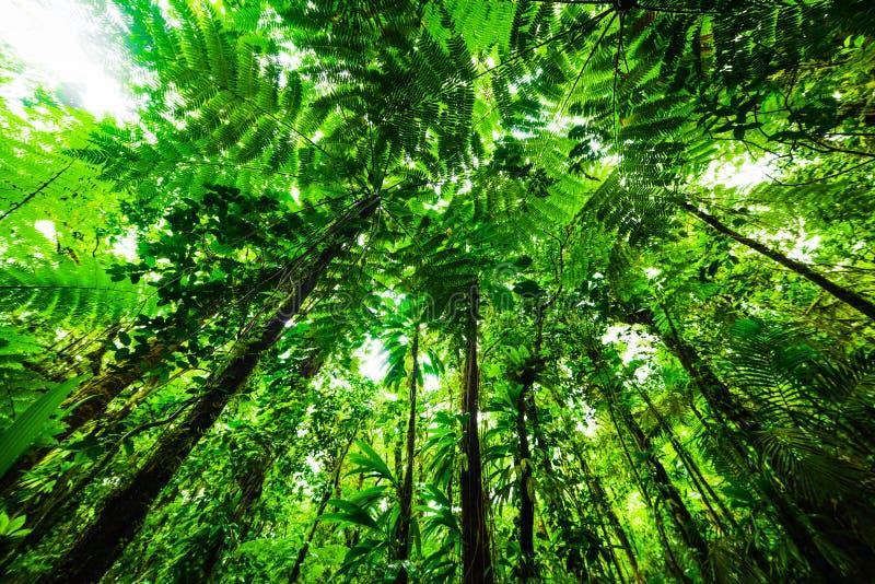 绿色树在巴斯特尔密林 免版税库存照片