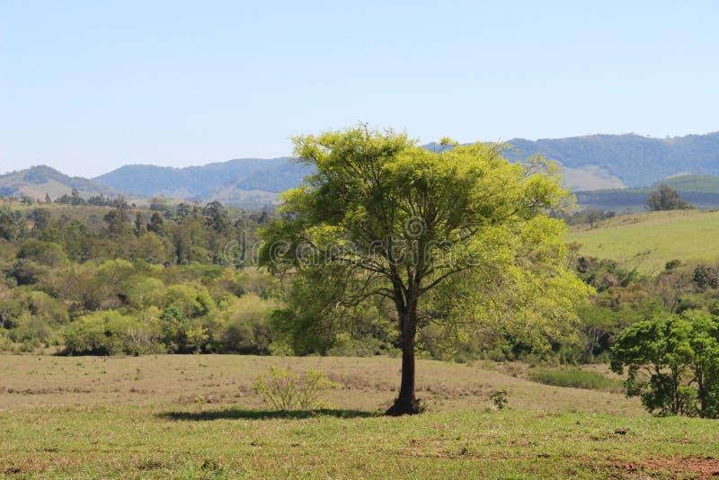 绿色树在有山的草甸 免版税库存图片