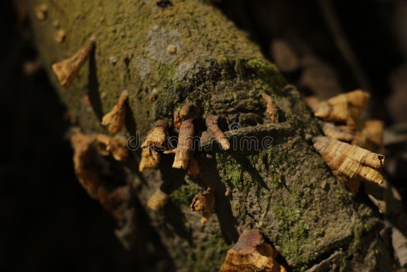 绿色树干用干蘑菇 免版税图库摄影