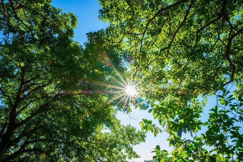 绿色树梢,在自然太阳光的年轻顶面树选择聚焦  图库摄影