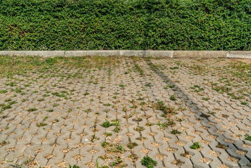绿色树篱篱芭 图库摄影