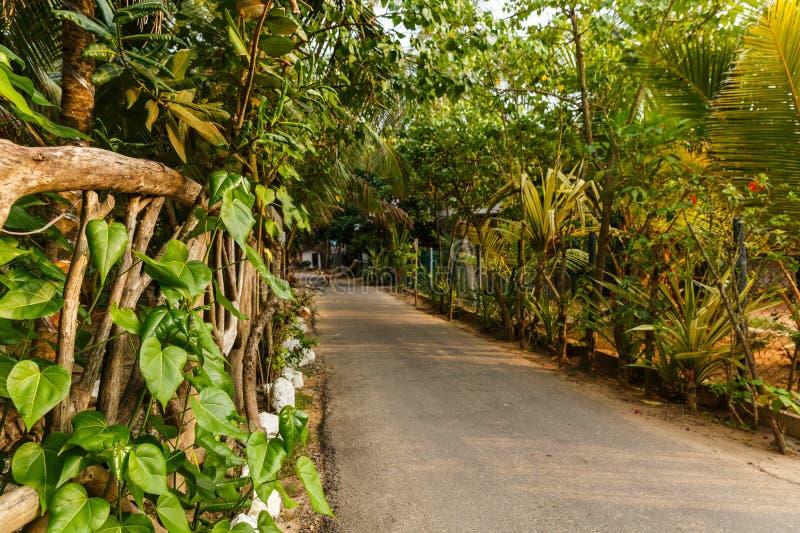 绿色树美好的风景看法在空的道路, sri附近的 库存图片