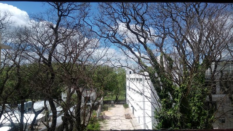 绿色树自然云彩天天空 免版税库存照片