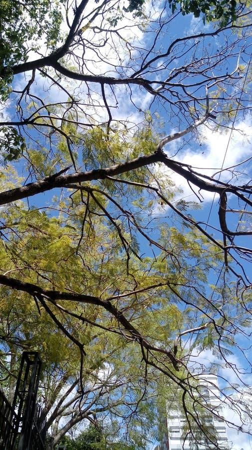 绿色树自然云彩天天空 免版税库存图片