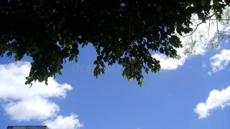 绿色树自然云彩天天空 图库摄影