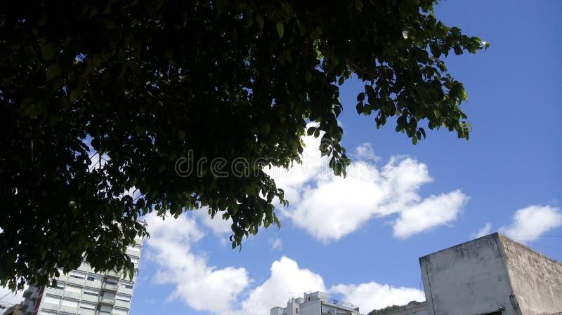 绿色树自然云彩天天空 免版税图库摄影