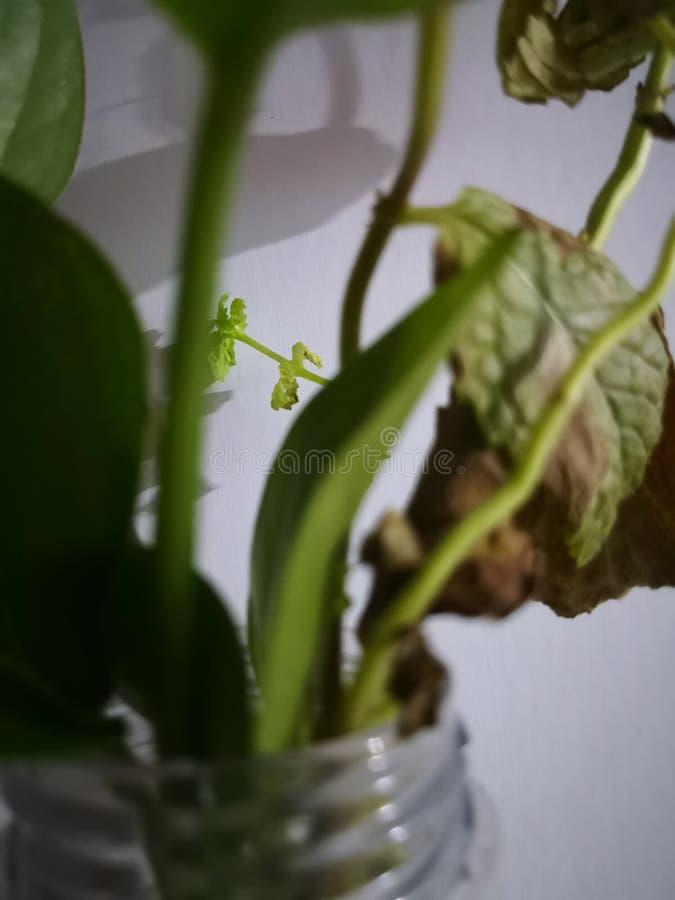 绿色树苗 免版税库存照片