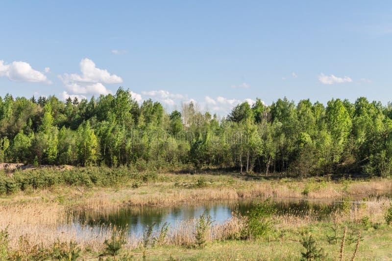 绿色树,干草蓟,沼泽的地形 免版税图库摄影