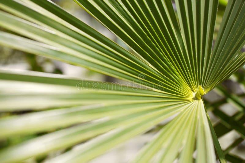 绿色棕榈叶在植物园,花卉样式背景里 库存照片