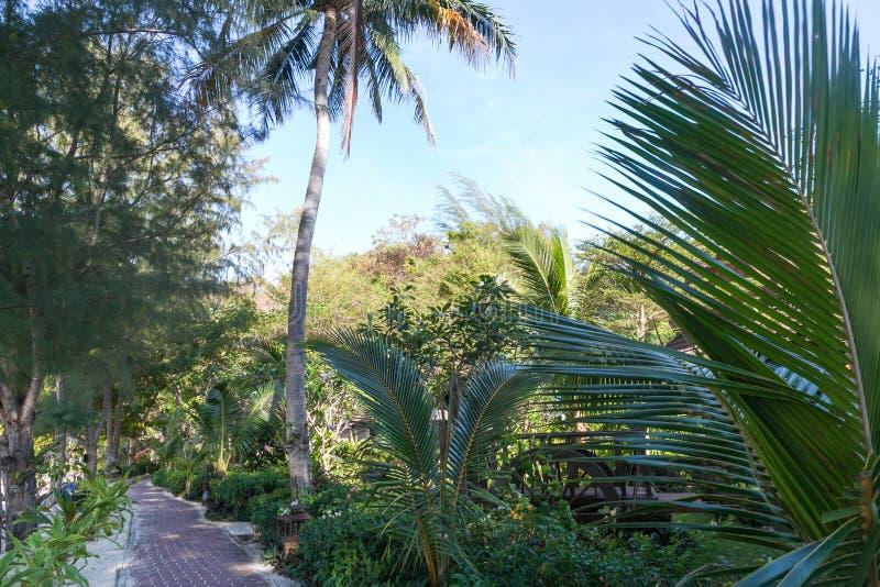 绿色棕榈树、植物和道路,发埃风景看法  免版税库存图片