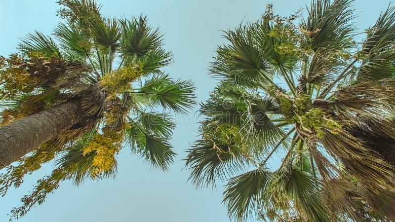 绿色棕榈树蓝天背景 免版税库存图片
