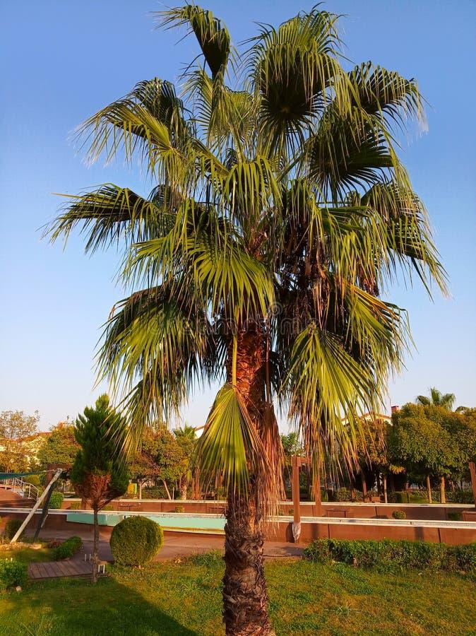 绿色棕榈树 免版税库存照片