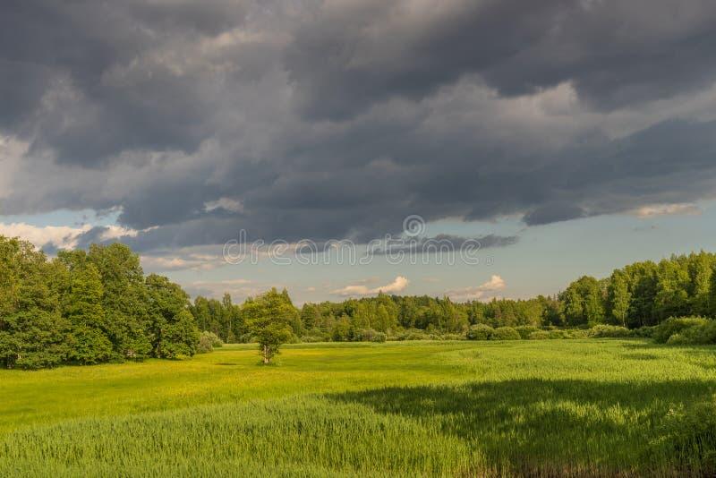 绿色森林和河夏天风景,长满与野草 一个混杂的森林包围的草甸 库存图片