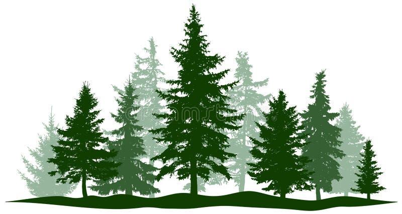 绿色森林常青杉木,被隔绝的树 公园圣诞树 各自,分开的对象 皇族释放例证