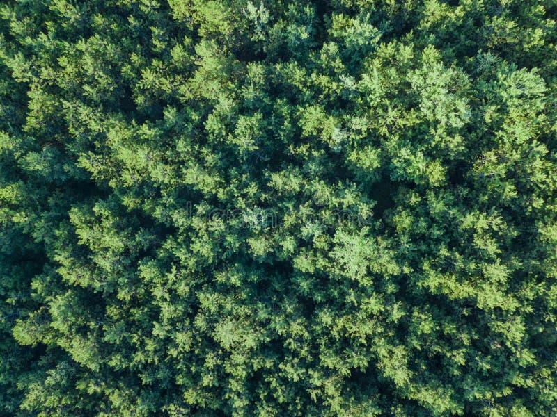 绿色森林树的顶部景色 库存图片