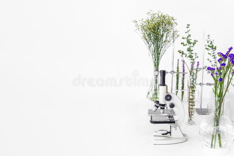 绿色植物和科学设备在laborotary的生物 有试管/玻璃容器和钳位和绿色的显微镜 库存照片