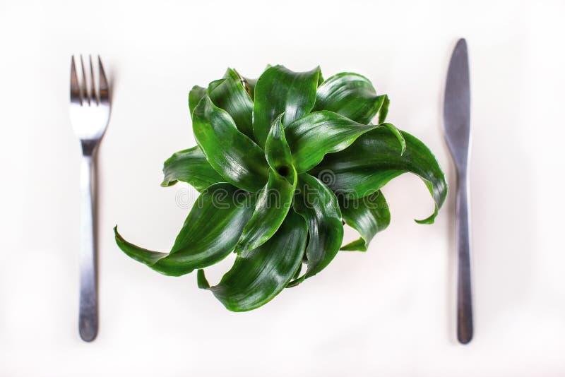 绿色植物和饮食 免版税库存照片
